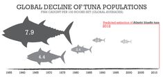 The Atlantic Bluefin Tuna is predicted to go extinct in our lifetime.