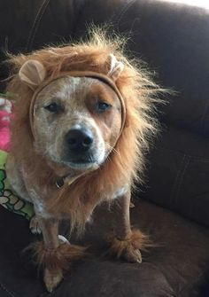 Look daddy I'm a lion ok now give me a treat please