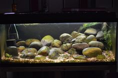 1 meter Hillstream aquarium van Corydorasfan | Foto-album | Het Nederlandstalig AquaForum