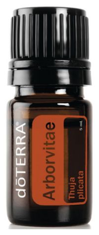 "Known as the ""tree of life, "" Arborvitae is majestic in size and abundant in unique benefits. Learn more about this Essential Oil. Check more at http://anaturalshift.com/arborvitae/"