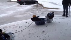 Daddy takes his boys on a 3 car laundry basket sled ride