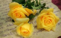 Wallpaper letter, roses, yellow, yellow roses