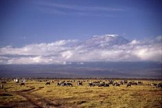 Kilimanjaro... look how tiny the wildlife is comparatively.