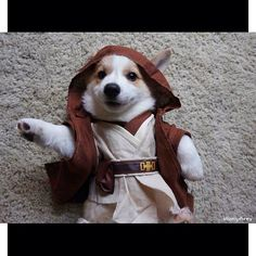 Corgnelius baby brother is a Jedi!!