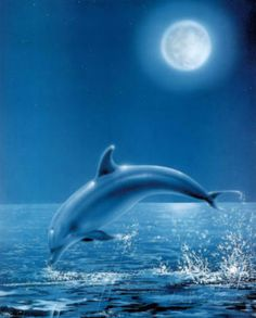 pictures of dolphins that you can print | Moon Dolphin Art Print Poster Posters at AllPosters.com