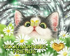 Cat with butterfly on its nose - Good Morning Friends - greeting