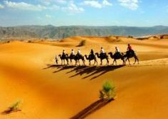 Tourists traveled by camels in desert along the Silk Road.
