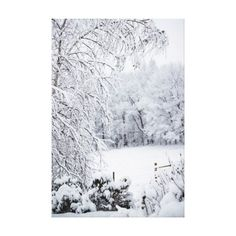 Winter Wonderland Snow Scene Photo Canvas