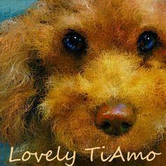 2日前にこのpickに愛犬ティアモの写真を珍しくアップしました、その写真を元にお絵描きしましたが、普段はお友達の写真を元にしてお絵描きしましたが、その写真の方だけが写真と絵になった作品を比較できませんが、今回は少し前の愛犬ティアモの写真と比較できるようにアップしました。  Be Nice To Me - Rumer http://youtu.be/6RwqPPwHZ_M