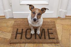 8 manualidades para decorar la casita de tu perro