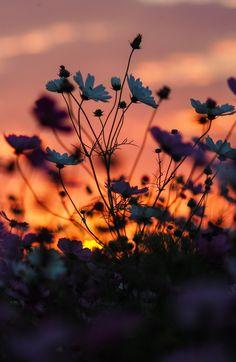 Nature is Life. Sunset Wallpaper, Cute Wallpaper Backgrounds, Pretty Wallpapers, Wallpaper Art, Amazing Wallpaper Iphone, Cute Flower Wallpapers, Wallpaper Photo Hd, Screen Wallpaper, Phone Backgrounds
