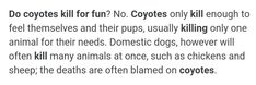 Coyote Facts, Pup, How To Plan, Feelings, Dog Baby, Puppies, Puppys