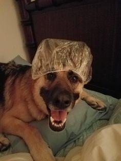 Ready for shower.!   http://ift.tt/2jHZEQO via /r/dogpictures http://ift.tt/2iL0kRp  #lovabledogsaroundtheworld