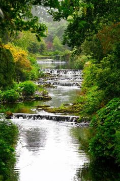 Mount Usher Gardens, Wicklow, Ireland.