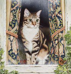 """Poppy"" Workaday Cats / Geoffrey Tristram"