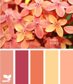 sweet flora from Design Seeds.  Great spring/summer palette for showers or wedding.