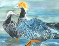 The 2013 Florida Junior Duck Stamp of Maranda Hawkins, 16, honorable mention in Group 4, grades 9-12. DDWS photo