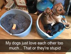 Funny Animals Of The Day 26 Pics