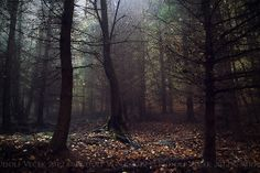 Forest | Flickr - Photo Sharing!