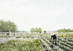 Productive Garden: An Endless Path for the Five Senses Young Eun Choi, …