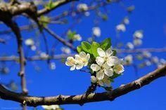 Gânduri dichisite - d' Oana Rotariu: Vis de primăvară