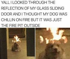 funny animal pics Animal memes are by far so hilarious that you would have to laugh even yo resist maximum. Here is the collection of 16 funniest animal memes and funny quotes that wi Funny Animal Memes, Stupid Funny Memes, Funny Relatable Memes, Haha Funny, Funny Animal Pictures, Funny Cute, Funny Dogs, Funny Animals, Funny Stuff