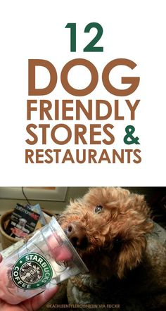 12 Dog Friendly Stores & Restaurants iheartdogs.com/...