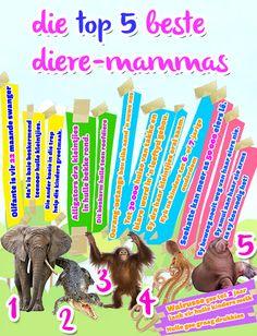 Afrikaanse taakhulp: Top 5 beste diere-mammas. Olifante. Alligators. Oerang-oetangs. Seekatte. Walrusse. Sorg vir babas. Diere. Animals. Hoezit