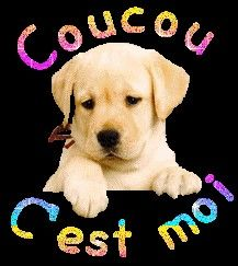 Calin Gif, French Practice, Happy Friendship Day, Good Morning, Labrador Retriever, Gifs, Icons, Animals, Food