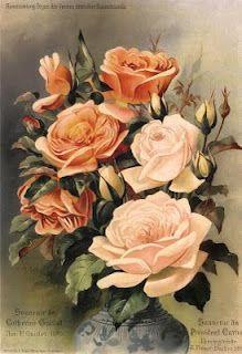 Peachy - pink roses