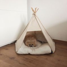 This cute pomeranian puppy will warm your heart. Dogs are incredible companions. Cute Dogs And Puppies, Baby Dogs, I Love Dogs, Doggies, Cute Baby Animals, Animals And Pets, Funny Animals, Toy Pomeranian, Dog Accesories