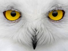 Go birding in Australia and New Zealand - it's cooler than you think!  Birder's bucket list: 10 of the world's most elusive bird species