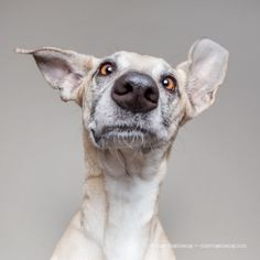 Les personnes mais aussi les animaux sont les sujets favorisde cette photographe allemande mais Elke Vogelsang aime particulièrement prendre en photo les chiens, en particulier ses trois chiens qu'elle a adoptés en Espagne et sauvés d'une mort certaine, répondant au nom de Noodles, de Scout et de L