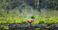 Hiring a Landscape Kelowna Irrigation Repair Company – Too Much Rooms Irrigation Repair, No Mow Grass, Sprinkler Heads, Landscape Maintenance, Favorite Pastime, Lawn Care, Beautiful Gardens, Places To Visit, Plants