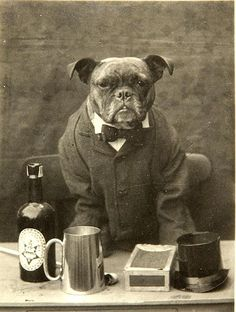 From Pinned by Judi Crowe. English Bulldog Art, French Bulldog, Bulldog Images, Clever Dog, Nanny Dog, Pitbull Pictures, Cat People, Vintage Dog, Old Dogs