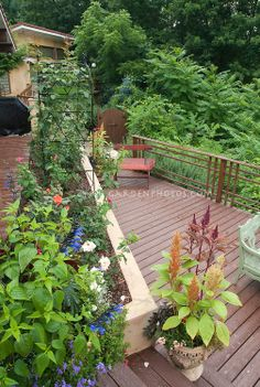 Home deck in two levels, with rose garden, planter containers, bench, trellis, house, salvia, celosia, chair, railing, woods, steps