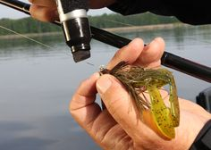 10 Top Tricks For Bass - In-Fisherman