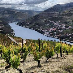 Looking down at the Douro River in Portugal from the Vineyards of Quinta dos Murcas. Douro River Cruise, Douro Portugal, Douro Valley, Spain And Portugal, Most Beautiful Cities, Honeymoon Destinations, Wine Country, Dream Vacations, Portuguese