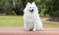 White dog names: 100 best names for white dogs Fox Terriers, Little Dogs, Popular Female Dog Names, Baby Dogs, Dogs And Puppies, Yorkie Puppies, Pet Dogs, Wolverine Xmen, Yorkshire Terrier