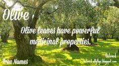 Tree Names: Olive