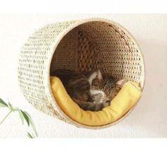 Cesto usado como cama para gatos.