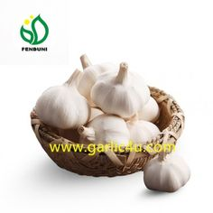 Cold Storage Garlic with good quality in 10kg/carton, logo on carton is available! Chinese China, Fresh Garlic, Pure White, Pure Products, Vegetables, Cold, Storage, Purse Storage, Larger