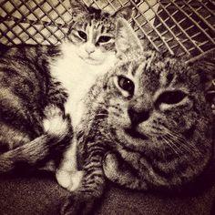 Dos gatas en una
