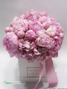 Roses in box Ruže u kutiji