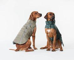 BONNIO Ropa de Navidad para Perros Ropa de Invierno para Mascotas Perros Perrito Divertido Bordado Camiseta roja c/álida