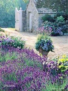Vertical Gardening with old gate doors gazebo lavender garden :: stone cottage don't mind if i do Lavender Cottage, Lavender Garden, Lavender Fields, Lavander, Lavender Blue, Spanish Lavender, Purple Garden, French Lavender, Beautiful Gardens