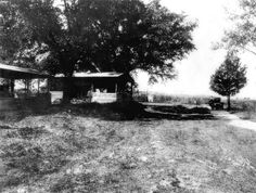 Sugar cane field, syrup mill and evaporator at North Farm - Okaloosa County, Florida