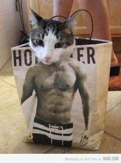 muscular cat