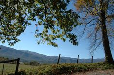 Seeing the beautiful Smoky Mountains from Cades Cove is just gorgeous!