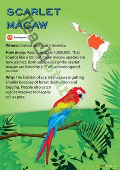 Scarlet Macaw Endangered Animal Poster